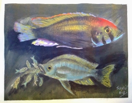 Soviet, a local artist based in Nkhata Bay, painted this for us! A colourful A. calliptera male and a mouthbrooding female.